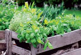 tips for creating a kitchen garden old house restoration