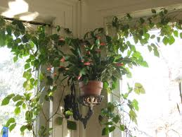 House Plant Ideas by Decor Window Treatment And Interior Paint Ideas With Hanging
