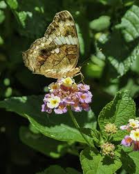 free photo butterfly garden flowers insects free image on