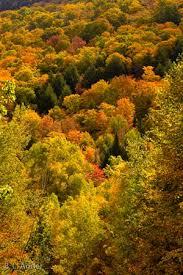 fall foliage acadia tops october