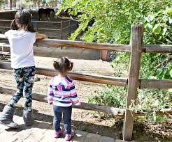 family fun at the zoo with teddy soft bakes filled snacks brie