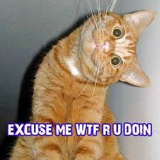 Excuse Me Meme - excuse me cat meme cat planet cat planet