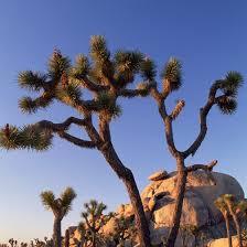 California vegetaion images Natural vegetation of desert hot springs california usa today jpg