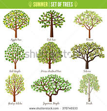 japanese trees stock images royalty free images vectors