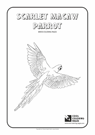 scarlet macaw parrot coloring page cool coloring pages