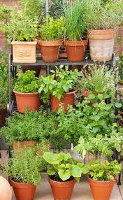 Potted Herb Garden Ideas Lovely Design Herb Garden Pots Best 25 Ideas On Pinterest Growing
