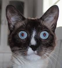 thanksgiving cat gif yoworld forums u2022 view topic gif war