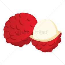 lychee fruit lychee vector image 1465163 stockunlimited