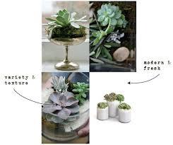 succulents terrariums and indoor landscapes