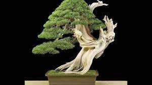 pot bonsai design basic guidelines to pick a pot for your bonsai youtube