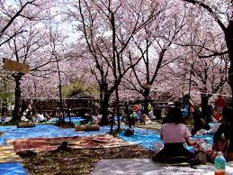 Auburn Botanical Garden Cherry Blossom Festival Auburn Botanic Gardens