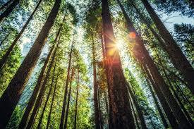 selfleaders values tree