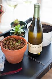 diy wine bottle succulent planters
