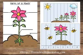free flower life cycle printables proverbial homemaker