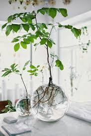 plante bureau 30 inspirational plante de bureau localsonlymovie com