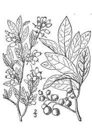 the genealogical world of phylogenetic networks charles darwin u0027s