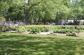 rain lily farm austin urban gardens