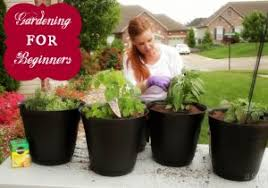 Raised Gardens For Beginners - how to build a raised garden bed planting vegetable for beginners