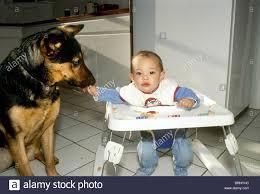 afghan hound 9 months afghan babies stock photos u0026 afghan babies stock images alamy
