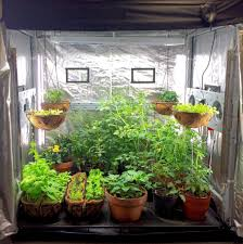 indoor tomato garden indoor tomato garden kits garden how to