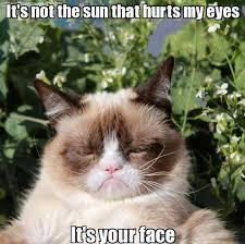 Tard The Cat Meme - grumpy cat meme 12
