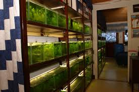 Aquascaping Shop Killifish Fish Rooms If You Can U0027t Give Your Fish A Room How
