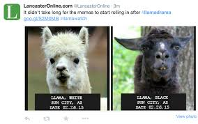 Llama Meme - who had better llama memes ehealth insurance resource center