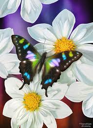butterfly flowers painting by jq licensing
