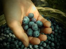 growing blueberries in southern california guide install it direct