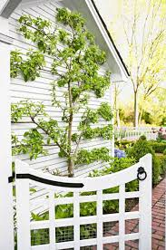 How To Plant Vertical Garden - how to create a vertical garden midwest living