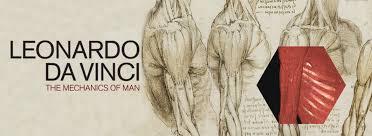 Anatomy Of Human Body Pdf Leonardo Da Vinci The Mechanics Of Man