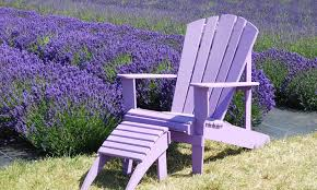 roll out flower garden lavender seeds groupon goods