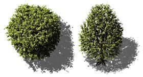 dosch design dosch 2d viz images bird s eye trees