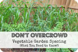 perfect plantings what you need to know about vegetable garden