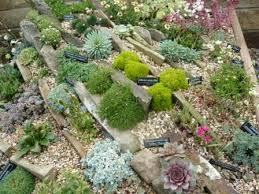 rock garden gardeners tips