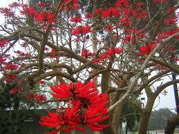 flowers san diego san diego daily photo tree with flowers