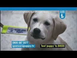 Sponsor A Puppy For The Blind Sponsor A Guide Dog Puppy Scarlett Youtube