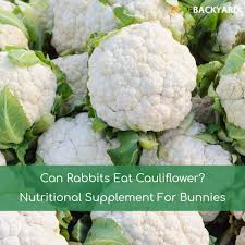 can rabbits eat cauliflower nutritional supplement for bunnies