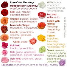 what do different colors mean what do pink flowers mean all the different colors of roses and