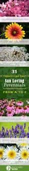 31 attractive and easy sun loving perennials a to z