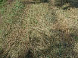 farmhand friday hay on a human scale part ii raking and curing