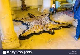 tiger skin rug stock photos u0026 tiger skin rug stock images alamy
