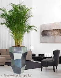 plante bureau aréca plante verte pour le bureau les plantes dans les bureaux