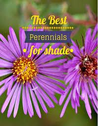 best perennial flowers for shade u2013 thin blog