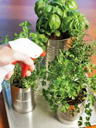 indoor herbs to grow grow your own kitchen countertop herb garden hgtv