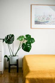 plante verte chambre à coucher s entourer de belles plantes le monstera frenchy fancy