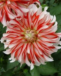 flowers images 4276 best photography flowers and trees images on pinterest