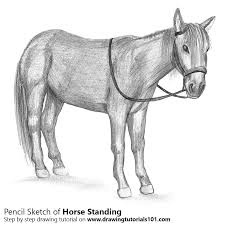 standing horse pencil drawing how to sketch standing horse using