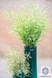 Vase Tall Cylinder Vase Tall Pine Tree Dutz Online Flowerfeldt