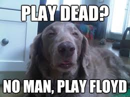 Stoned Dog Meme - best of the really high dog meme 16 pics pleated jeans